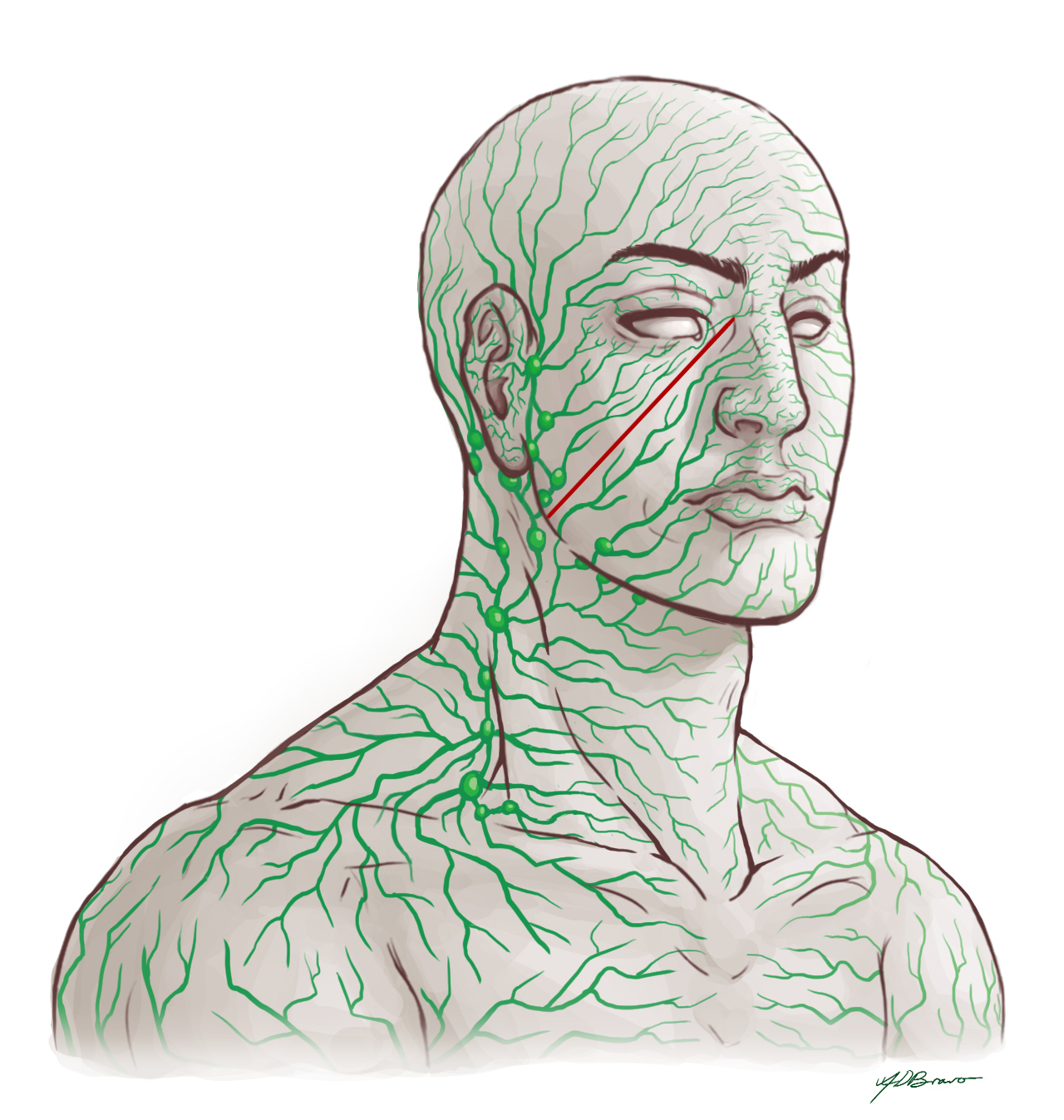 how to move your lymphatic system